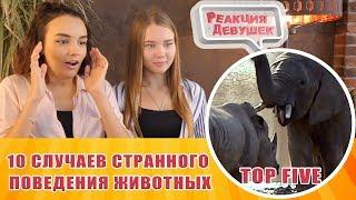 Реакция девушек - TOP FIVE - 10 СЛУЧАЕВ СТРАННОГО ПОВЕДЕНИЯ ЖИВОТНЫХ