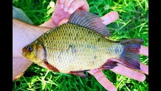 Рыбалка. Ловля карася на Болоте, Как поймать Золотого Карася