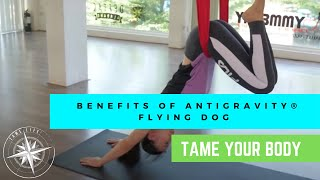 ANTIGRAVITY BENEFITS OF THE POSE - FLYING DOG - TAME LIFE