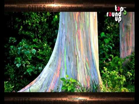 5 Most Amazing Trees