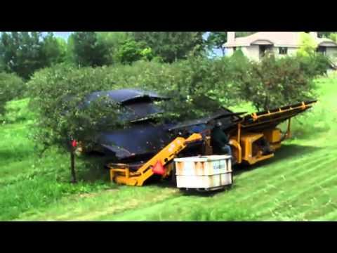 Kiraz Toplama Makinası