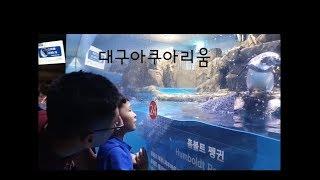 대구여행/대구아쿠아리움/여누네 가족 진짜 상어보러 아쿠…