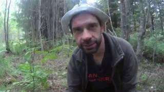 Как собирать грибы (Самый про стой способ) How to gather mushrooms (most of the simple method)
