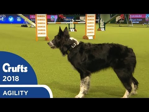 Agility - Crufts Team - Large Final Part 1 | Crufts 2018