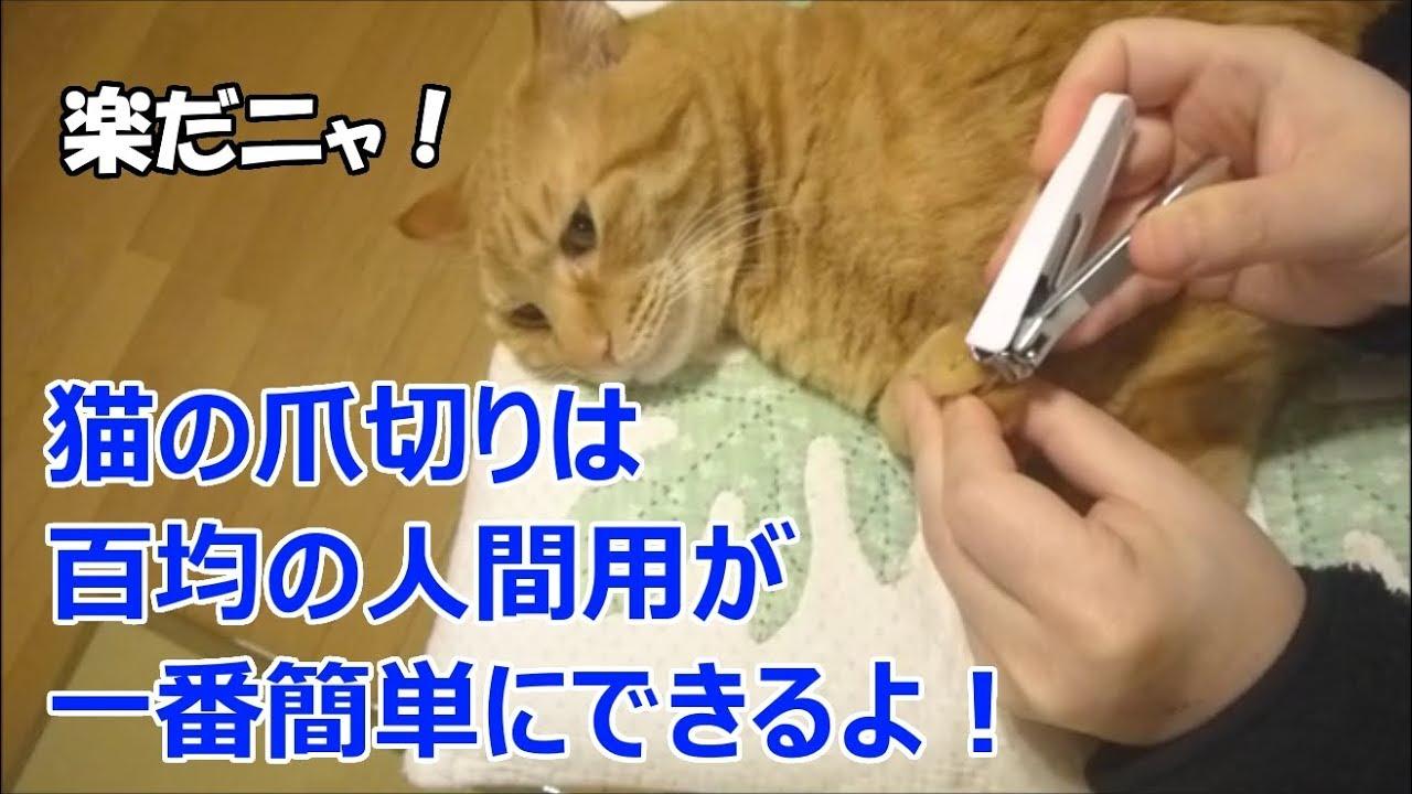 切り 爪 猫 の