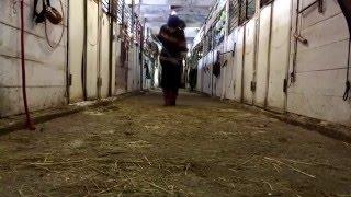 Уборка: Дома // На Конюшне vine by equvine(, 2016-01-22T14:42:13.000Z)