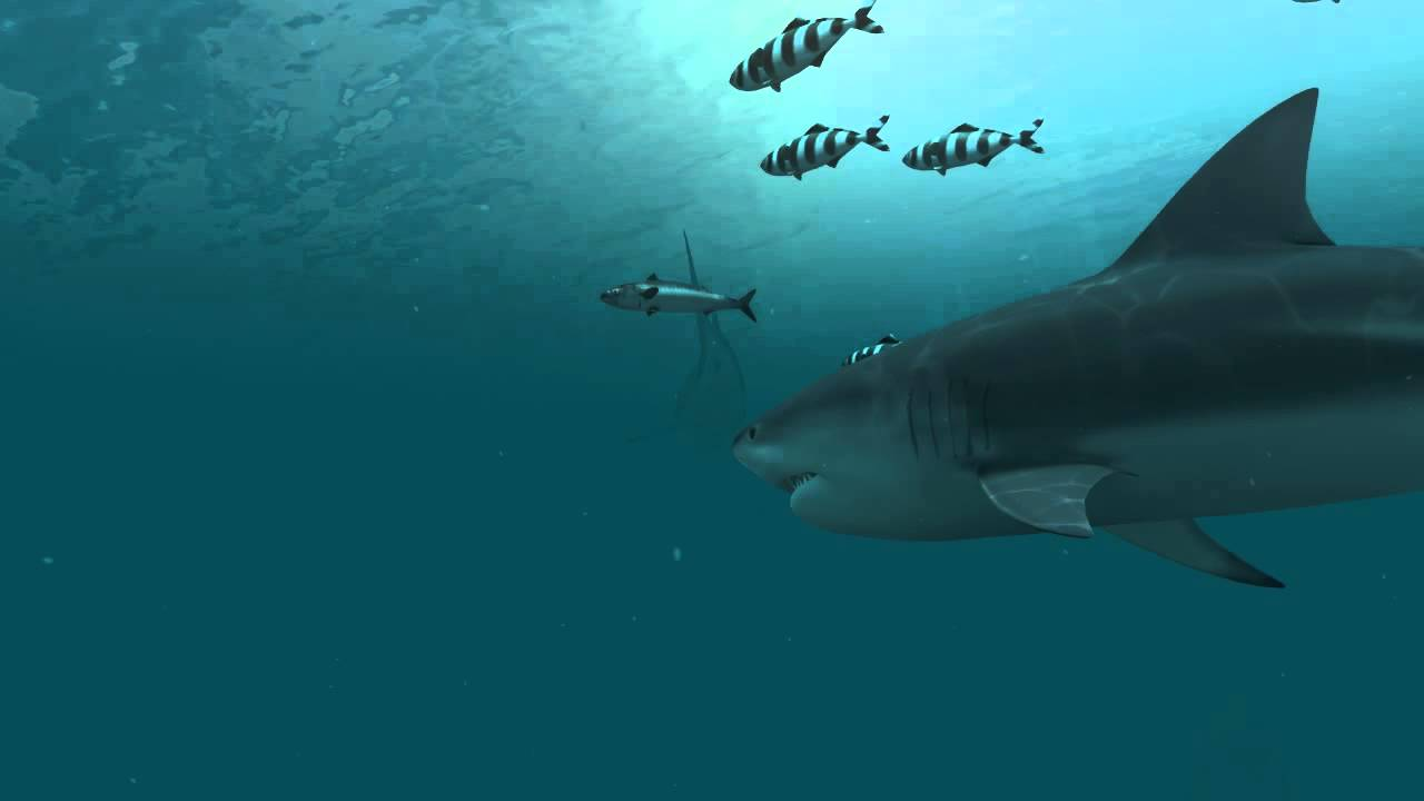 Sharks 3D Live Wallpaper and Screensaver - YouTube