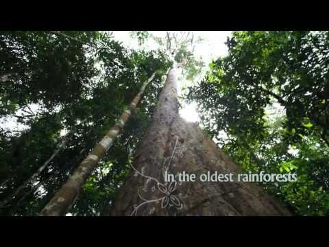 Eco Culture - Tourism Malaysia