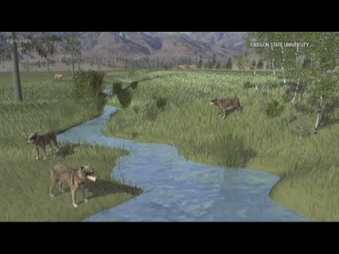 Yellowstone streams recover thanks to wolves