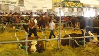 Sommet de l'élevage de Cournon 4/10/2012. Animation au stand Bovins Lait