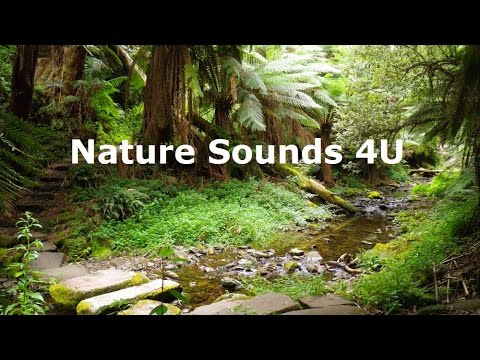 Nature Sounds - Australian Forest Bird Songs With Magpies -relaxing-study-meditation-ambient-ASMR