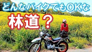 【菜の花スポット】#83  オフ車じゃなくても行ける千葉県の林道を探しに行ったら、意外な映えスポットも見つけてきた!