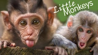 FIVE LITTLE MONKEYS ( पाँच शरारती बंदर ) | Five Little Monkeys Jumping on the bed