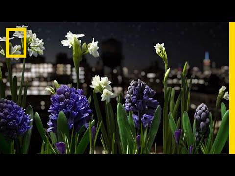 Watch a Garden Come to Life in This Absolutely Breathtaking Time-Lapse | Short Film Showcase