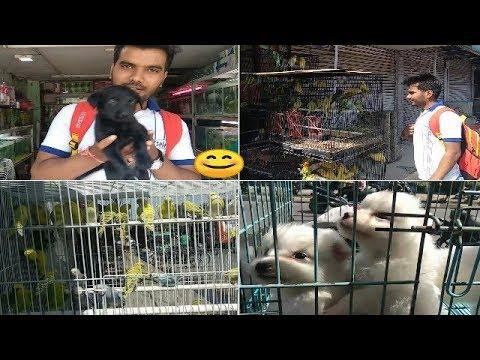 Pet Shop Indore
