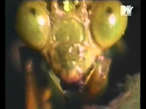 fila shoes praying mantis commercial