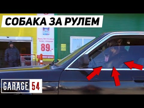 СОБАКА ЕДЕТ по ГОРОДУ за РУЛЕМ BMW 😱