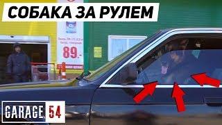 ЖЕСТЬ, СОБАКА ЕДЕТ по ГОРОДУ за РУЛЕМ BMW