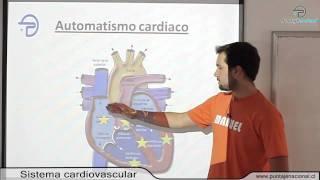 BIOLOGIA MC -- Procesos y funciones vitales -- Sistema cardiovascular