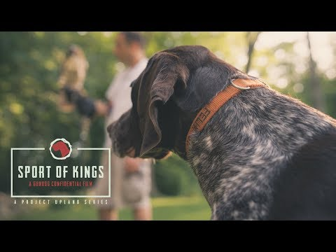 Sport of Kings // Official Trailer // Gun Dog Confidential