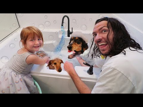 MY DOGS  PET SPA!!  Adley cleans her dogs morning routine for New UNiCORN CATCH App Reviews Movie