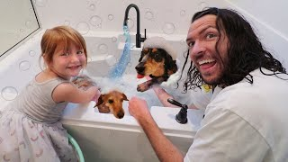MY DOGS 🐶 PET SPA!!  Adley cleans her dogs morning routine for New UNiCORN CATCH App Reviews Movie