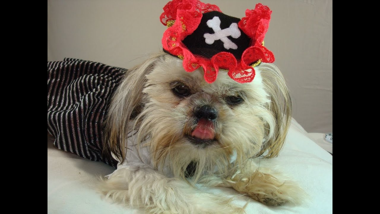 DIY Dog Halloween Costume Pirate