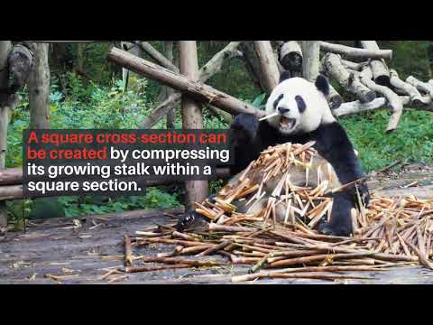 bamboo-is-the-construction-material-of-the-future-in-civil-engineering