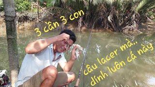 Bến câu giải quyết cơn ghiền mà kéo cả đả tay. Mồi cá dảnh đơn giản   Săn bắt SÓC TRĂNG  