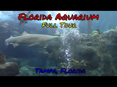Florida Aquarium - Tampa, Florida