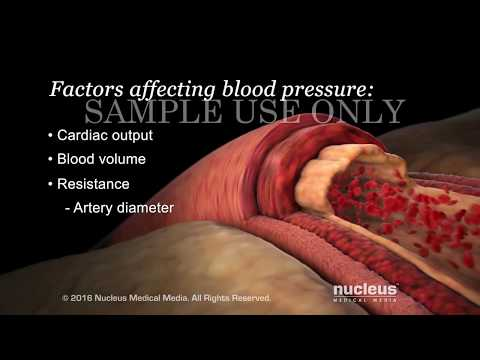 Understanding Basic Blood Pressure Control | Nucleus Health