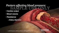 Understanding Basic Blood Pressure Control   Nucleus Health