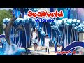 Sea World in Orlando, FL // Swim With Dolphins // Fun Video For kids