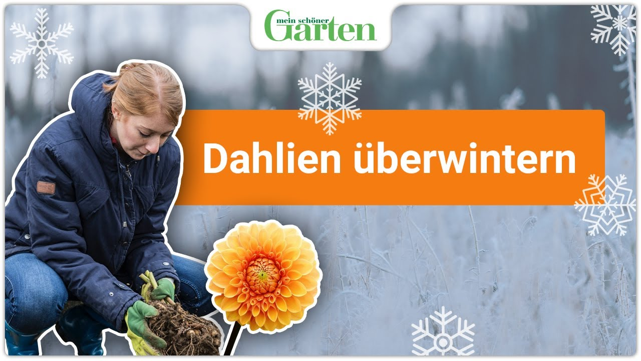 Fabelhaft Gartentipp: Dahlien richtig überwintern - YouTube #OV_64