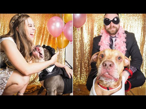 Shelter Dogs Are All Dressed Up For Epic Senior Prom