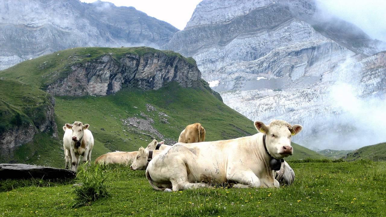 suisse paysages - Image