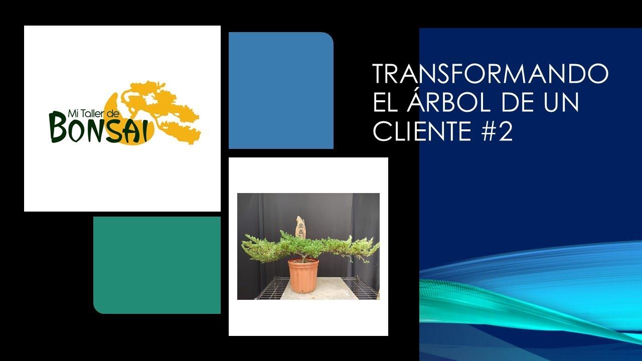 Transformando el árbol de un cliente #2