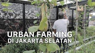 Mengembangkan Tren Urban Farming di Jakarta
