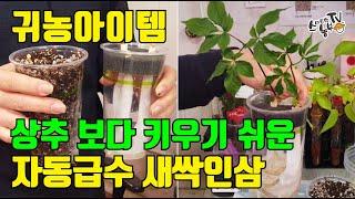 귀농아이템 새싹인삼 수경재배 토경재배 재배키트 사용방법