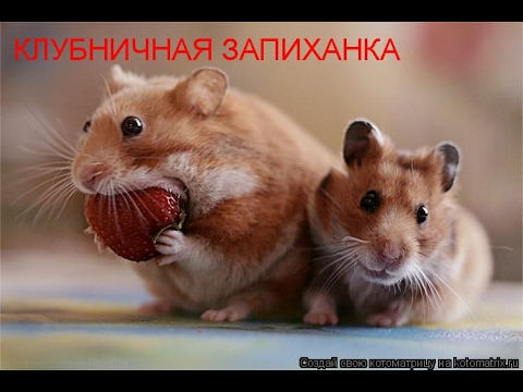 Смешные картинки про кошек и котят Выпуск №71  FUNNY CATS СМЕШНЫЕ КОШКИ