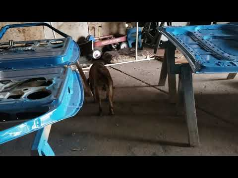 REAL Story With BUDDY The Shop Dog