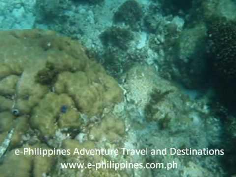 Danao Marine Park Snorkeling - Bohol