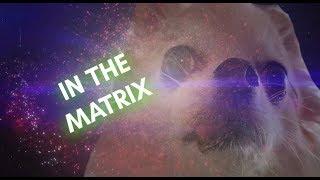 Chihuahua Transcendence - More Than Dog Meme