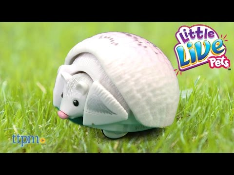 Little Live Pets Lil' Hedgehog  Pinny Angel & Princess Prickles From Moose Toys