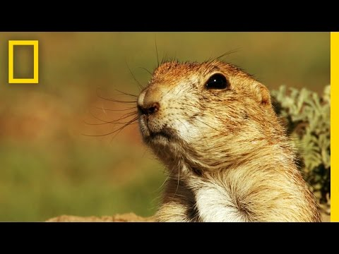 Prairie Dog Emergency Alert System | America's National Parks