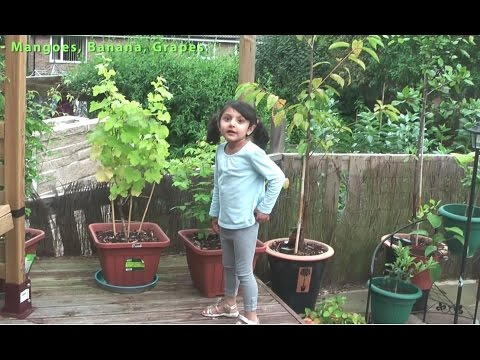 Kid's Fun Fruit Trees and Plants Garden UK (E1 - August 2012)