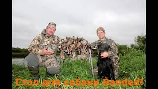 Стол для собаки Banded