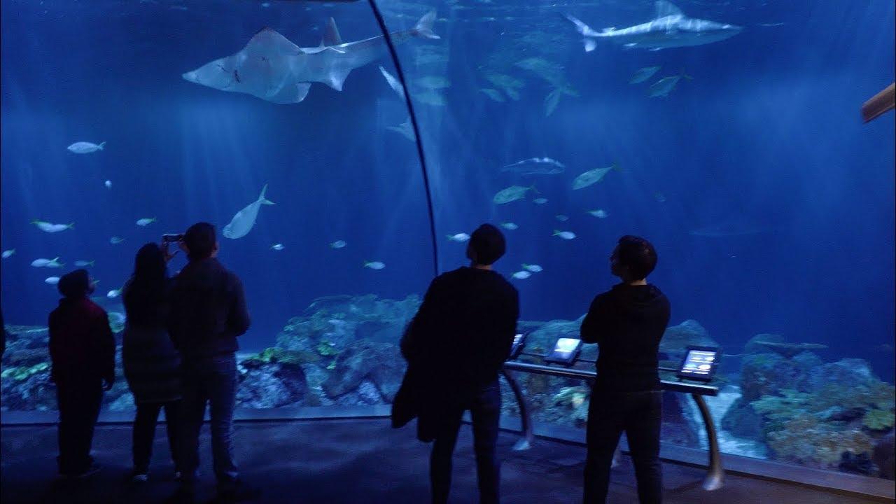 Shedd Aquarium Chicago Il Youtube
