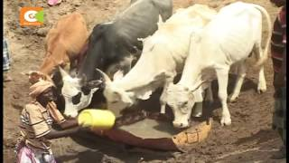 Pastoralists in Assa location, Tana Delta Sub-County face drought