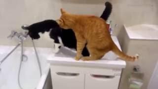 Веселые кошки #28   Приколы про котов   Угарная подборка 2016